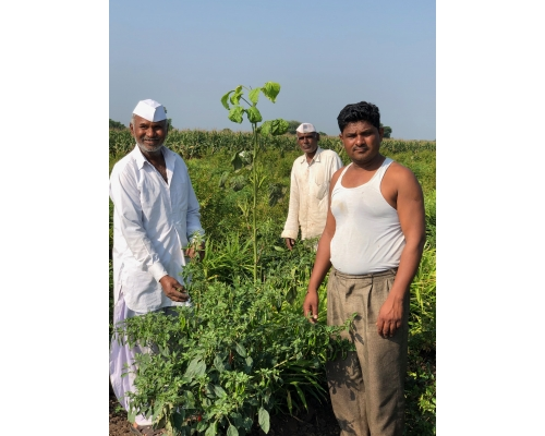 The Silent Leaders of the Organic Movement in India