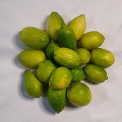 Gondhoraj Lemon